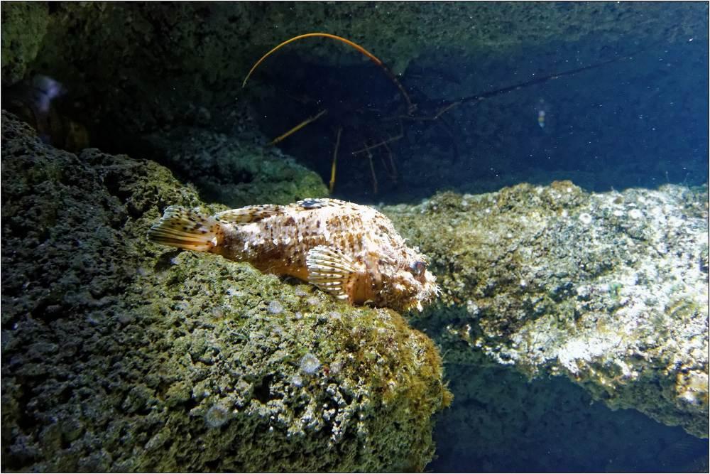 Aquarium-030