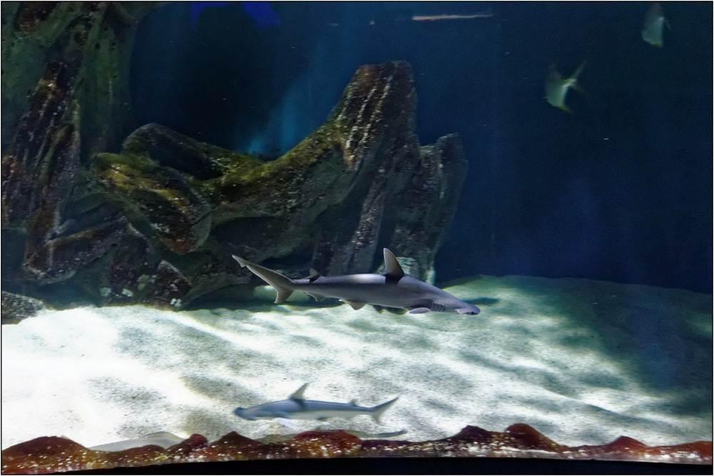 Aquarium-035