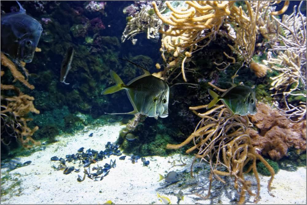 Aquarium-044