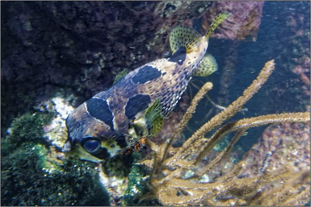 Aquarium-048