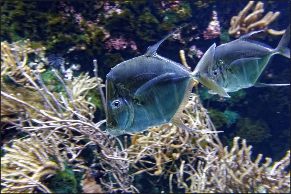 Aquarium-052