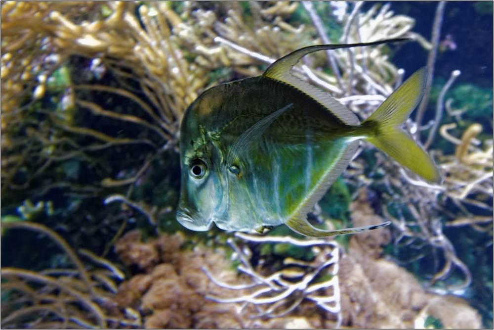 Aquarium-053