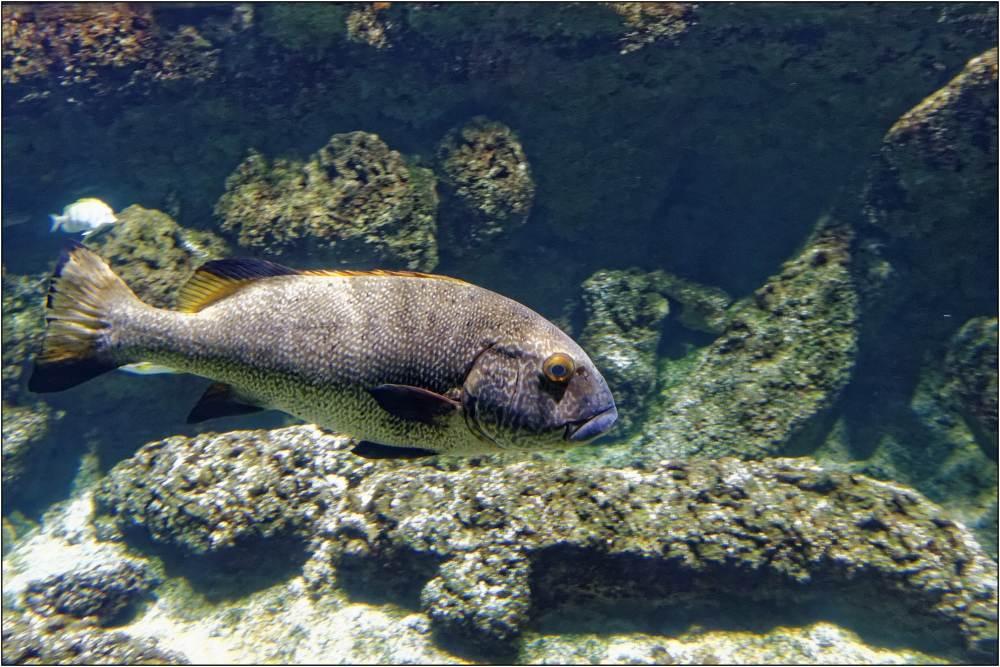 Aquarium-058
