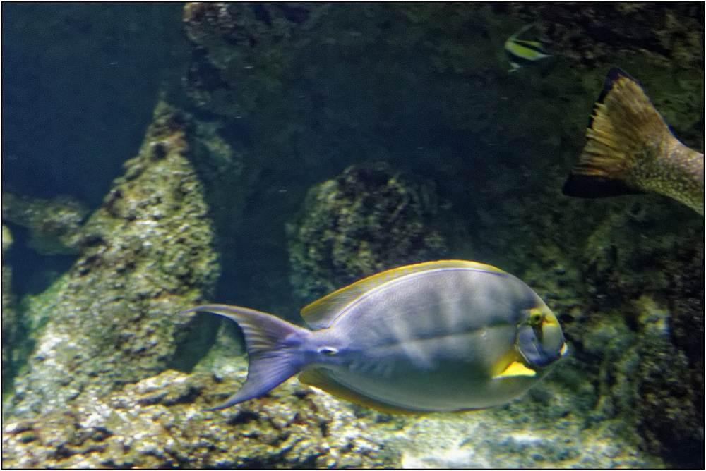 Aquarium-059