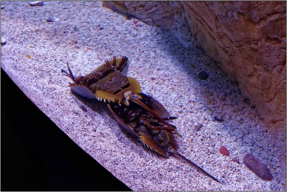 Aquarium-069