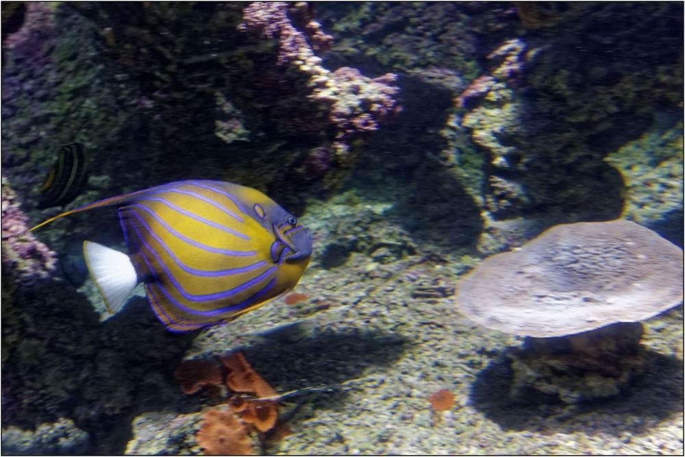 Aquarium-078