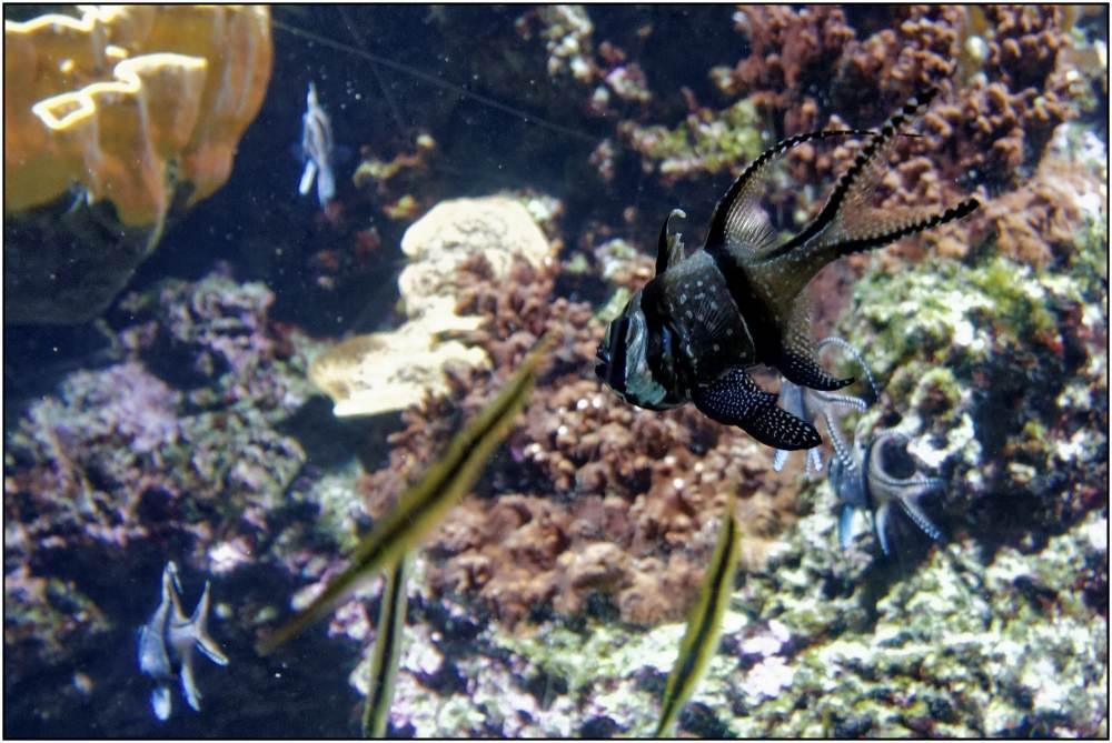 Aquarium-079