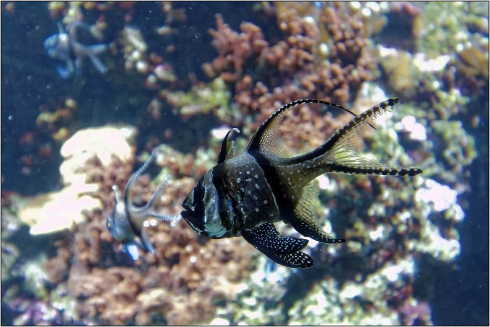 Aquarium-080