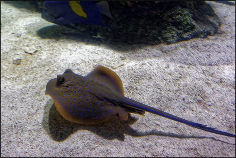 Aquarium-094