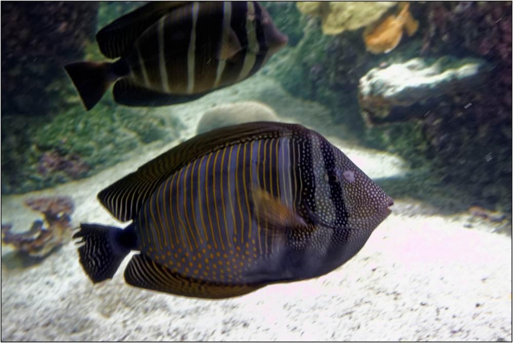 Aquarium-098