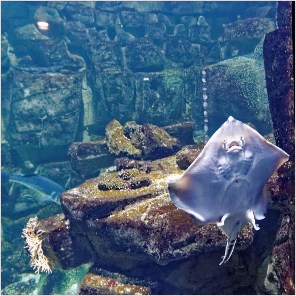 Aquarium-119