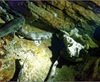 Vign_Aquarium-002