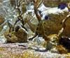 Vign_Aquarium-004
