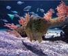 Vign_Aquarium-010
