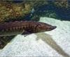 Vign_Aquarium-013