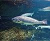Vign_Aquarium-015