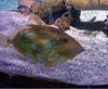 Vign_Aquarium-016