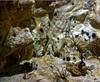 Vign_Aquarium-017