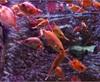 Vign_Aquarium-023