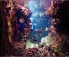 Vign_Aquarium-025