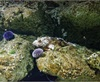 Vign_Aquarium-026