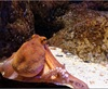 Vign_Aquarium-028