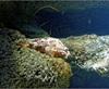 Vign_Aquarium-030