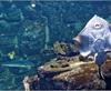 Vign_Aquarium-032