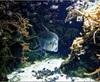 Vign_Aquarium-042