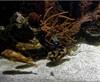 Vign_Aquarium-046