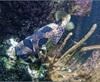 Vign_Aquarium-048