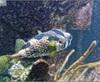 Vign_Aquarium-049