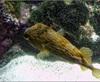 Vign_Aquarium-050