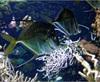 Vign_Aquarium-051