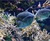 Vign_Aquarium-052