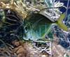 Vign_Aquarium-053