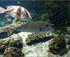 Vign_Aquarium-057