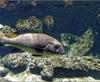 Vign_Aquarium-058