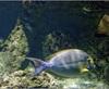 Vign_Aquarium-059
