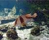 Vign_Aquarium-062