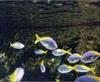 Vign_Aquarium-063