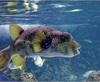 Vign_Aquarium-064