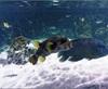 Vign_Aquarium-065