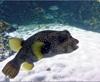 Vign_Aquarium-066