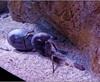 Vign_Aquarium-070