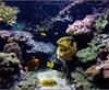 Vign_Aquarium-071