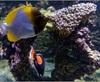 Vign_Aquarium-073