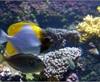 Vign_Aquarium-074
