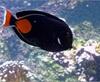Vign_Aquarium-075