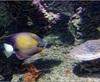 Vign_Aquarium-078